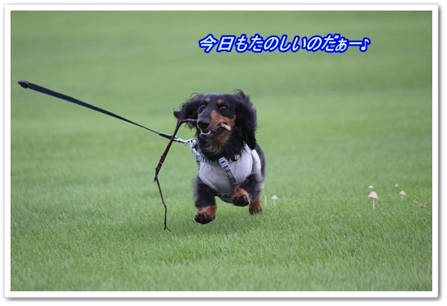 IMG_6044-1.jpg