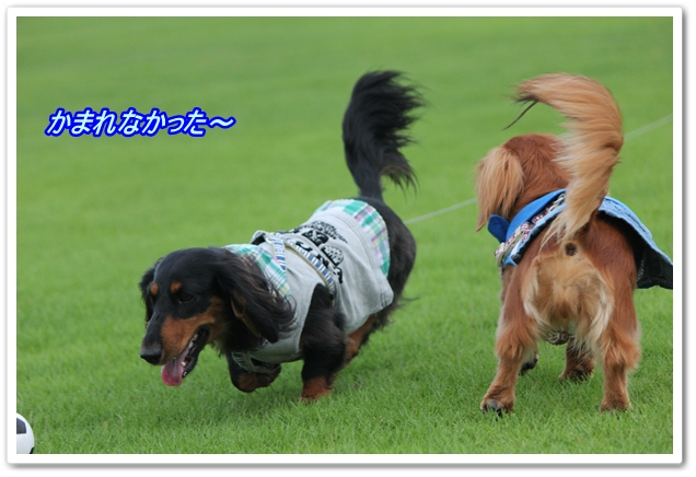 IMG_6060-1.jpg