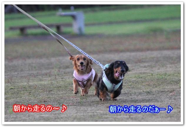 IMG_6697-1.jpg