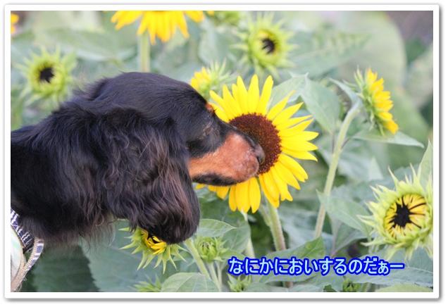 IMG_6763-1.jpg