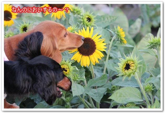 IMG_6767-1.jpg