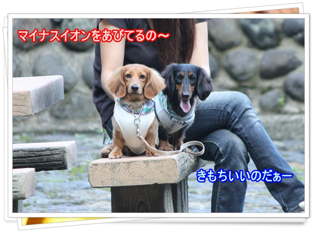 IMG_7552-2.jpg
