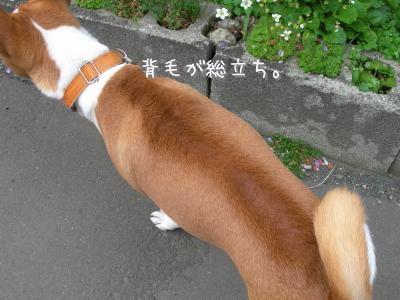 DSCN3220_convert_20110609214612.jpg
