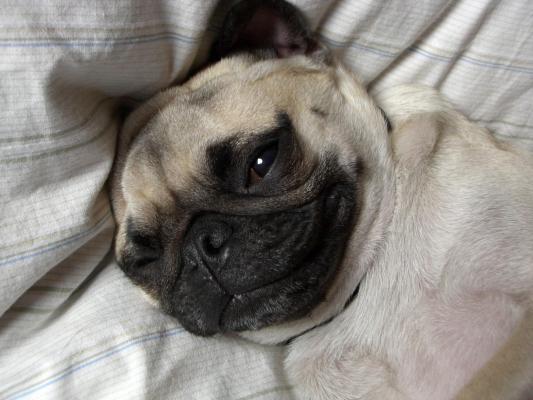眠る半眼の由紀夫