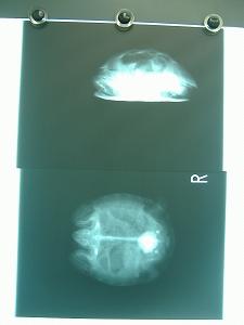 S-DSCF2876.jpg