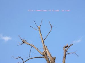 本日の空♪