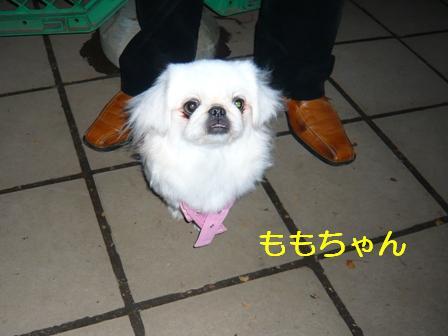11.4_komazawa_momo.jpg