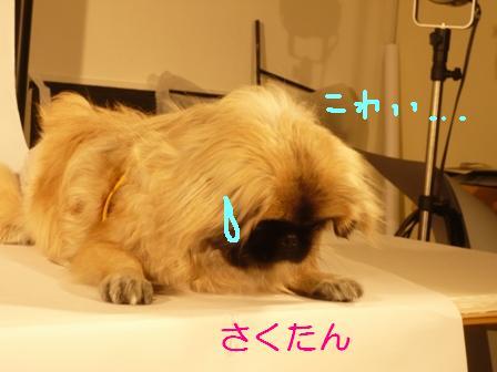 11.4_sakura.jpg