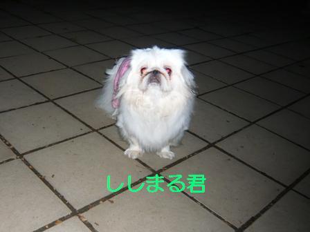 11.4_shishimaru.jpg