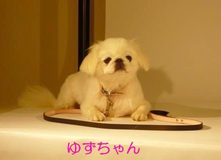 11.4_yuzu.jpg
