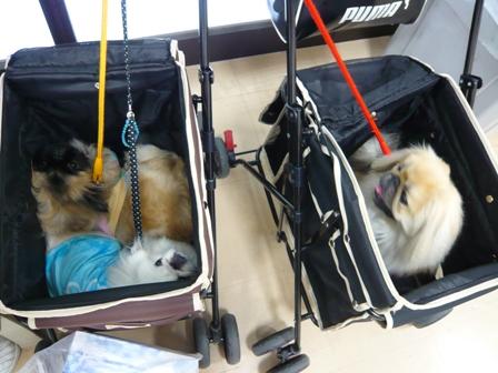 3peki_cart.jpg