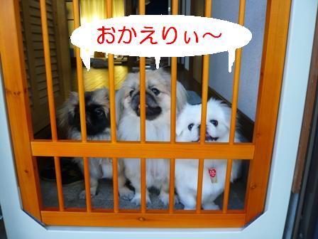 3peki_genkan.jpg