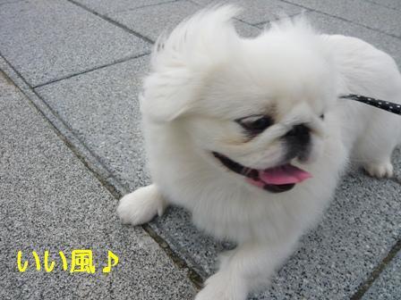 bentenjima_momo.jpg