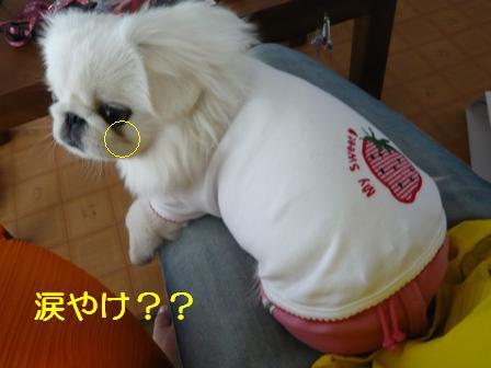 berry_namida.jpg