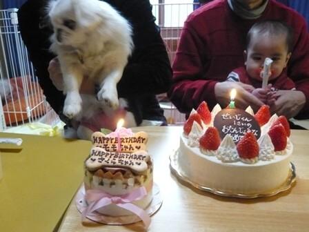 cake_momose-.jpg