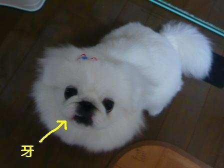 grooming4.jpg