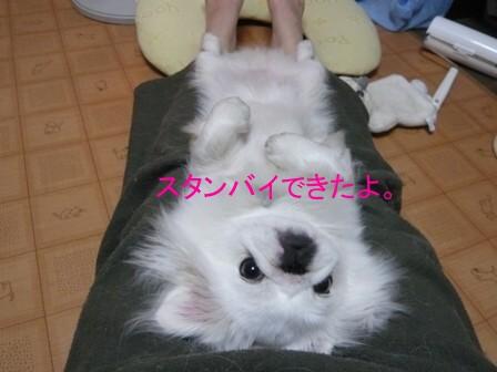 grooming_ok.jpg