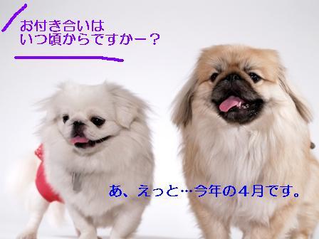 komazawa_kumamomo.jpg