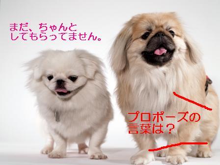 komazawa_kumamomo2.jpg