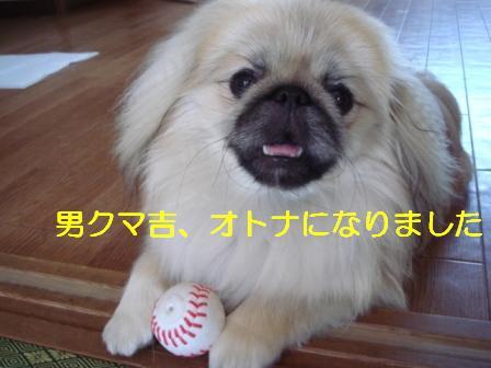 kuma_ball.jpg