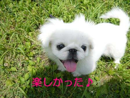 momo_smile.jpg