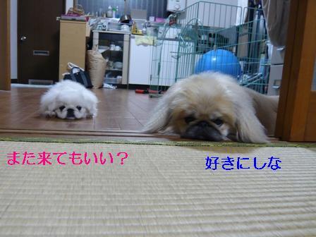 momokuma_floor.jpg