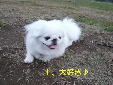 satoyama11.8-2.jpg