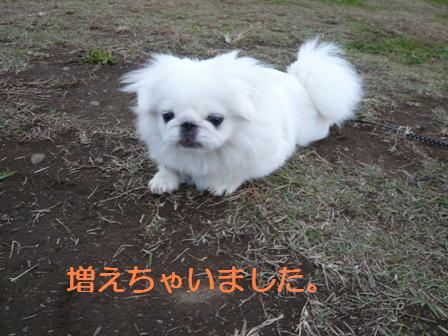 satoyama11.8-4.jpg