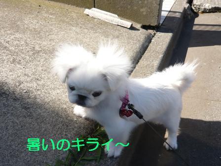 shibumomo.jpg