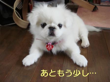 wakuchin.jpg