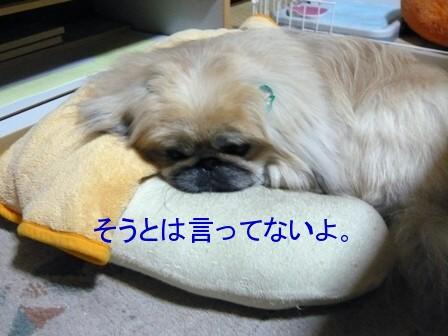 yome_kuma2.jpg