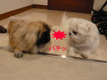 yoyogi_sakmomo2.jpg