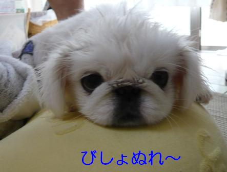 yuagari.jpg
