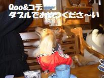 20071126112214.jpg