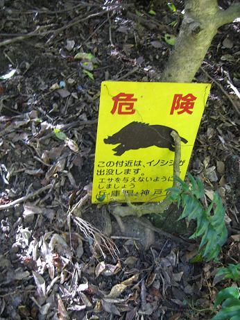 yamanobori14.jpg