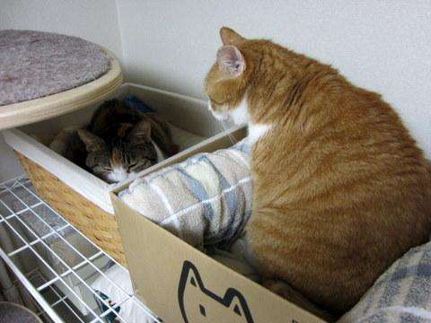 new猫ベッド (5)