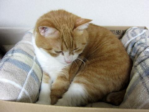 new猫ベッド (6)