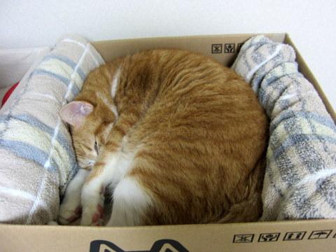 new猫ベッド (7)