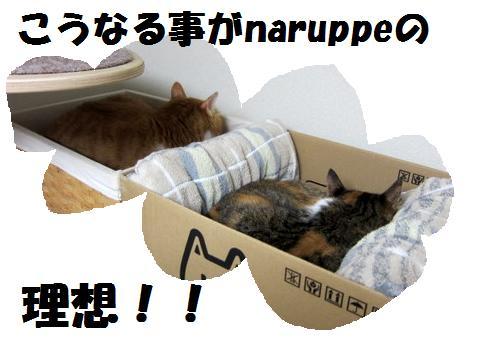new猫ベッド (3