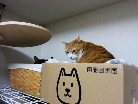 new猫ベッド (4)