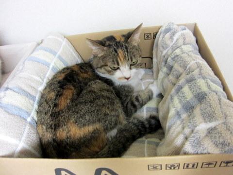 new猫ベッド (8)