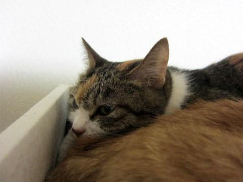 new猫ベッド (11)