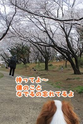 IMG_2695.jpg
