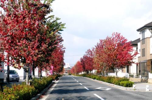 街路樹11-1