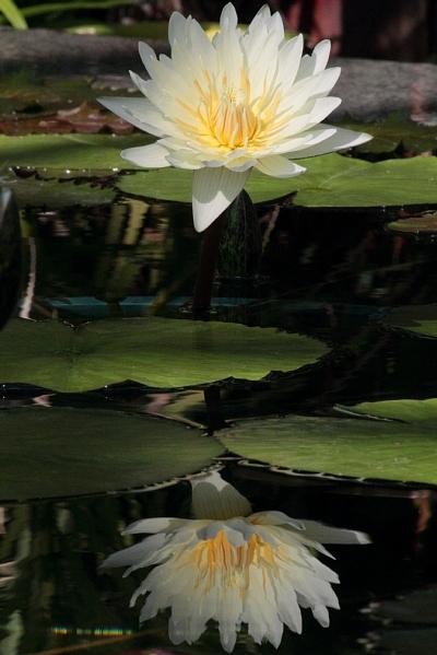 水生植物園⑪
