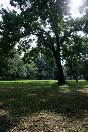 大好きな公園