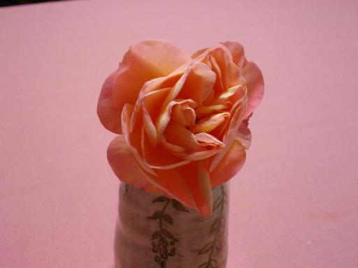 冬のバラ2