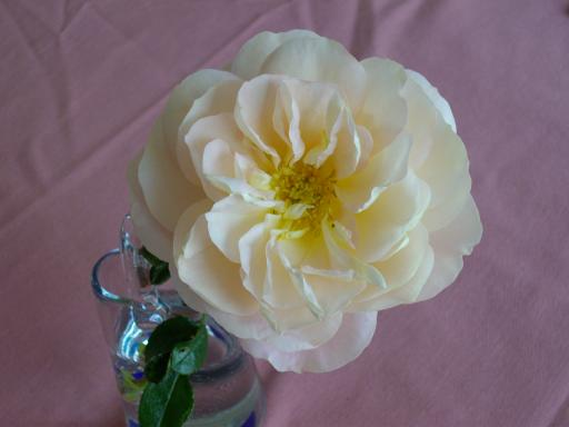 冬のバラ3