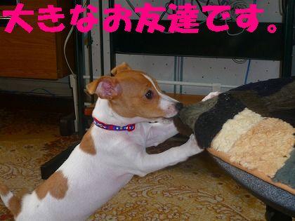 大型犬が好き ?