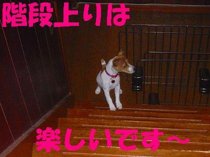 大好きな階段のぼり